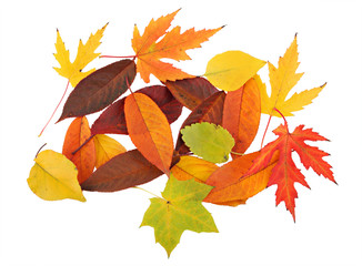 Colorful background of different beautiful autumn leaves