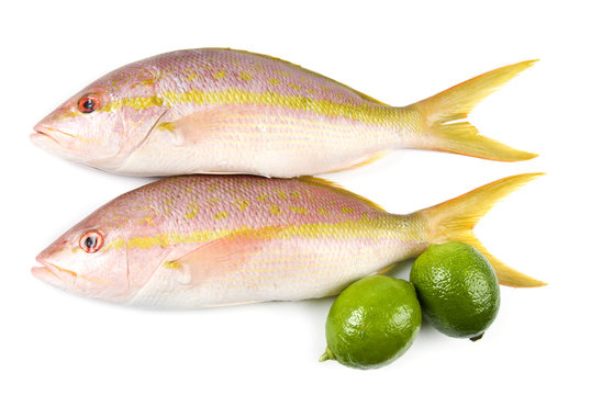 Raw Yellow Tail Snappers and Limes Isolated on White