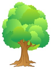 Big tree with green treetop