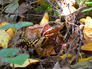 frog hiding in the foliage of the forest