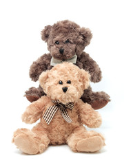 Teddy Bears on the white background