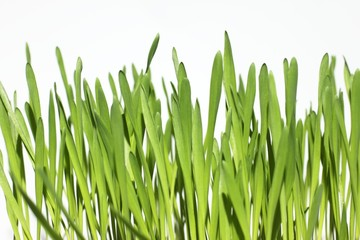 Green grass over white