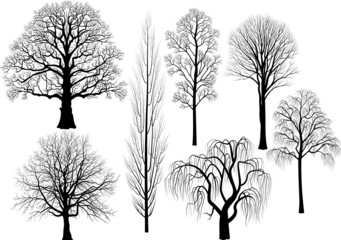 Collection of trees in black