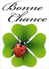 Coccinelle_Chance