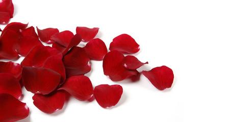 Photos illustrations et vid os de p tale de rose - Petale de rose bain ...