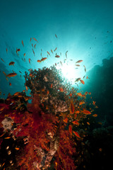 Fish, coral and sun in the Red Sea.