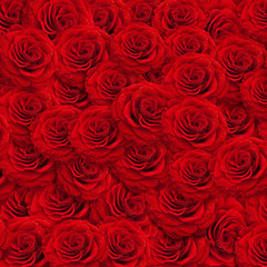 roses backgroud