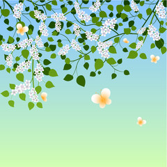 Spring background with blossoming branches and butterflies