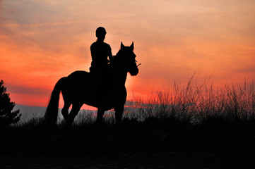 Photo sur Aluminium Equitation A Rider Silhouette on Horseback by sunset