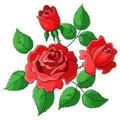 Flowers roses