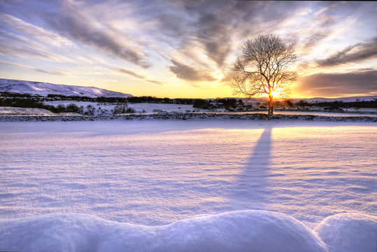Tree in snow scene with dramatic sunset