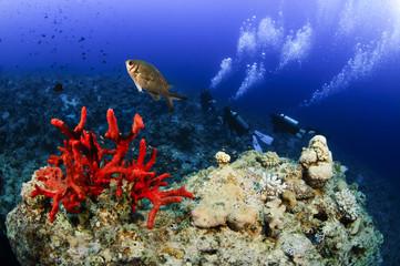 scuba divers decend on to dive site