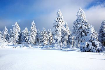 Winterwald 560