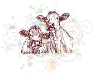 two cows hand draw sketch  & floral calligraphy ornament