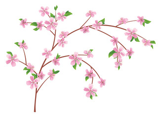 vector branch of peach with blooming flowers