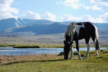 Grazing by the river