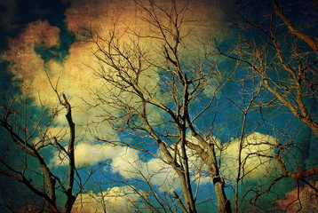 Vintage autumn trees and sky