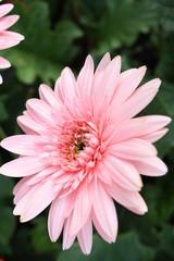 A pink flower close up