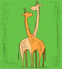 Couple of giraffes