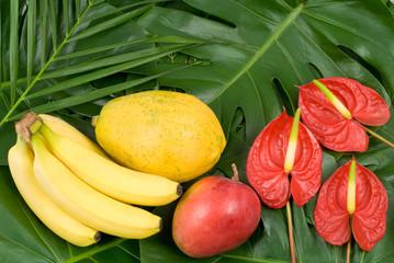 熱帯植物と熱帯フルーツ