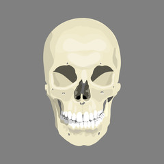 Human skull, vector illustration, eps10
