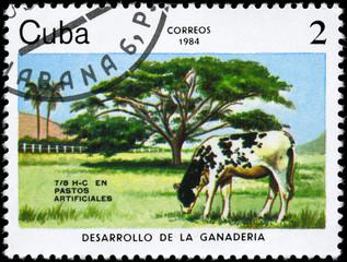 CUBA - CIRCA 1984 Artificial pastures