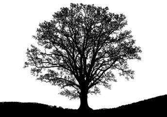 Baum - Umrisse