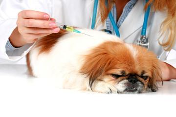 Dog healthcare.