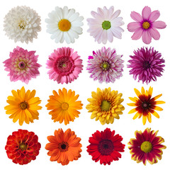 Autocollant pour porte Gerbera Collection of daisies