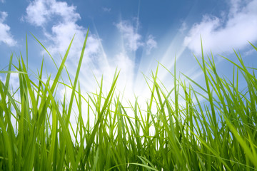 green grass and sun