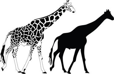 giraffe silhouette vector