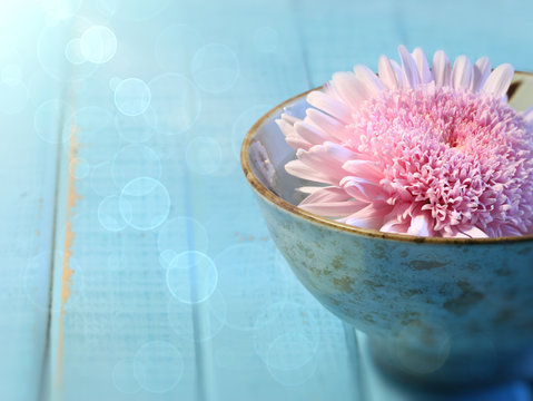 Close up of chrysanthemum flower in bowl