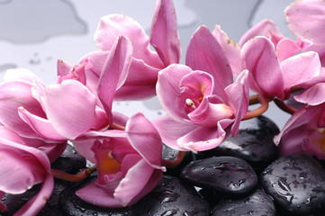 Aluminium Prints Spa Set of cattleya orchid flower and stone with water drops
