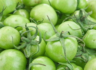 Green raw tomato