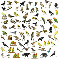Set of 81 photographs of birds isolated