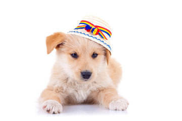 dog wearing a romanian traditional hat
