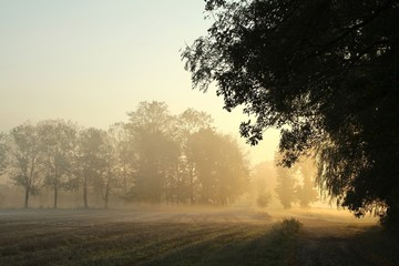 Keuken foto achterwand Bos in mist Sunrise over the meadow in a foggy autumn morning