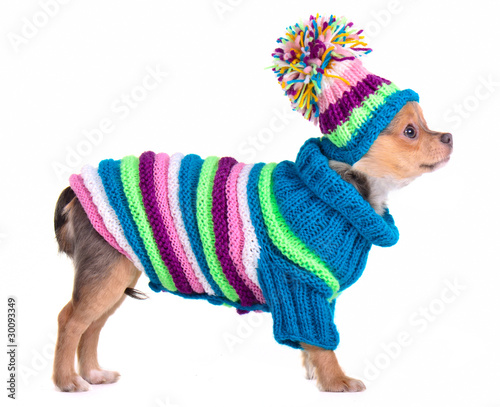 Вязаная шапочка для чихуахуа своими руками