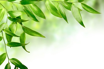 Fototapete - green leaves
