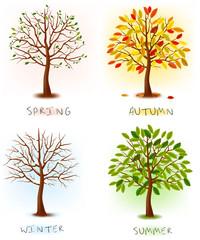Fototapete - Four seasons - spring, summer, autumn, winter. Art trees.