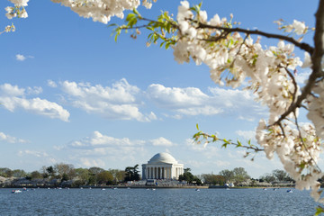 Jefferson Memorial Cherry Blossoms Tidal Basin USA