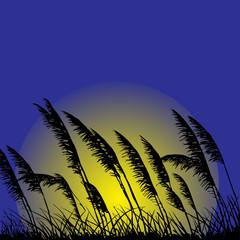 Wild grass-