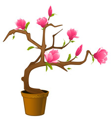 Beautiful bonsai with flowers