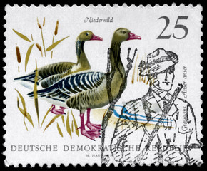 GDR - CIRCA 1968 Graylag Geese