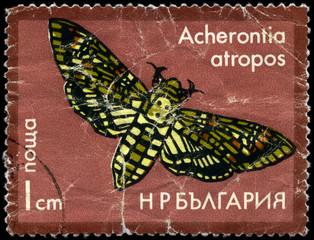 BULGARIA - CIRCA 1975 Hawkmoth