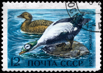 USSR - CIRCA 1972 Spectacled Eiders