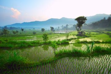 Papiers peints Les champs de riz Bali