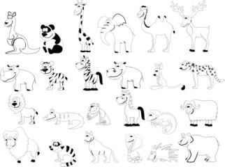 черно-белые животные