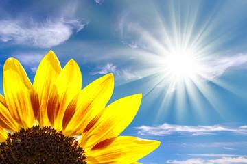Tournesol, soleil, ciel bleu
