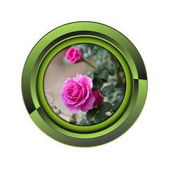 Wall Mural - rose jardin jardinage plante plantation printemps bouton fleur
